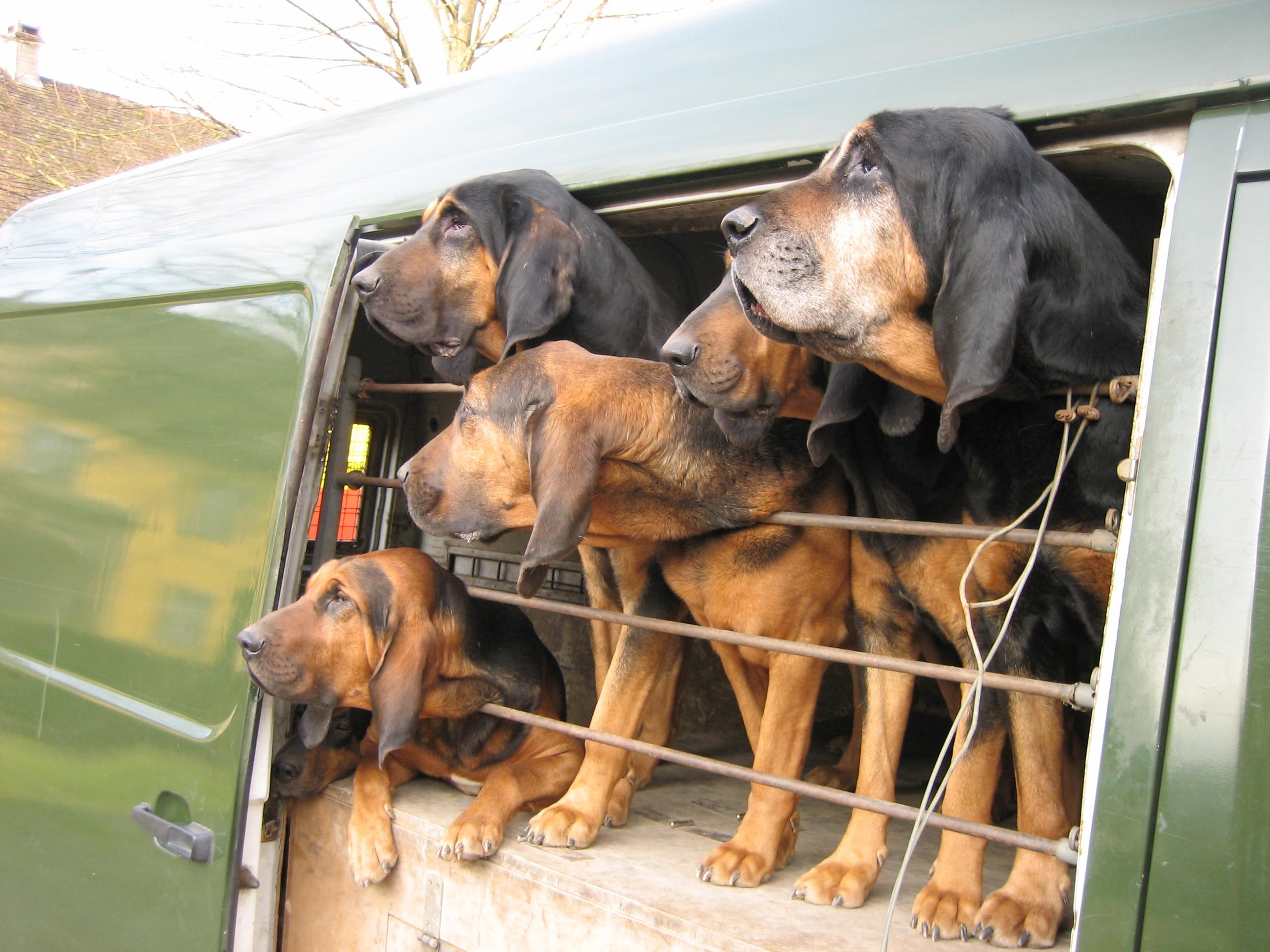 A Bloodhound To Die For Rosenkotten - W...